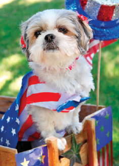 JULY 4TH BIKE/PET PARADE & PICNIC