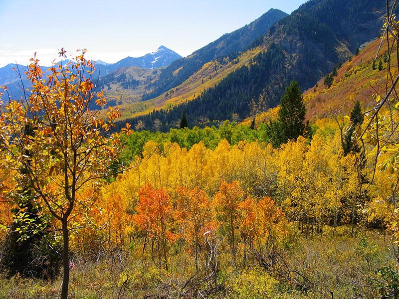 Beautiful Fall Drives in Colorado